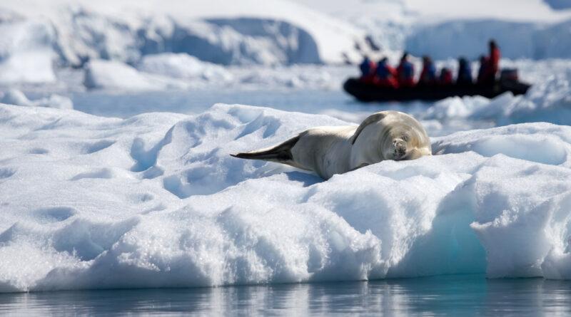 seal life in Antarctica
