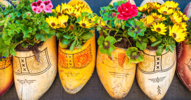 Dutch old wooden clogs with blooming flowers