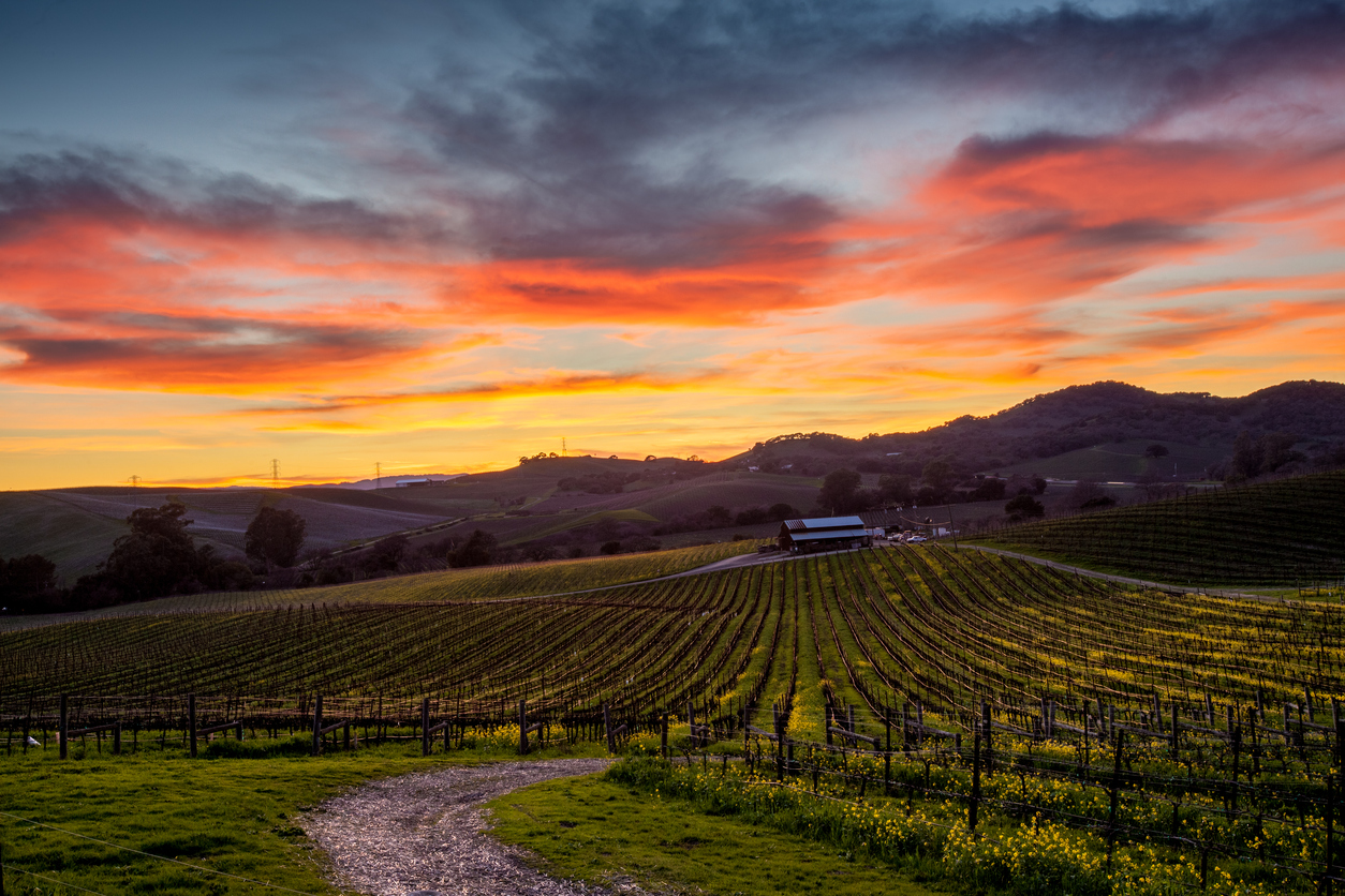 Colorful sunset over a Napa California vineyard