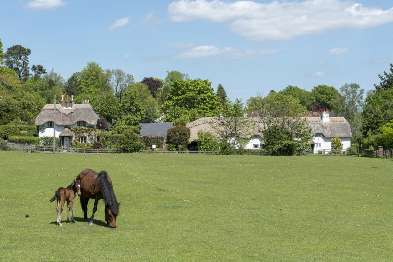 Pony and foal at Swan Green, Emery Down in the New Forest National Park, Hampshire, England, United Kingdom. With a backdrop of thatched cottages, in summer.